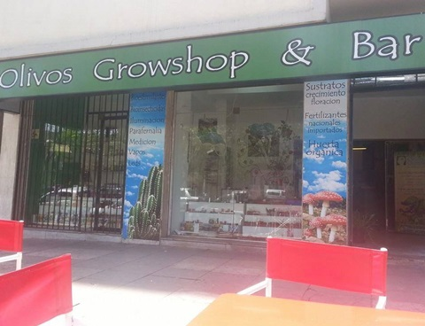 olivos grow