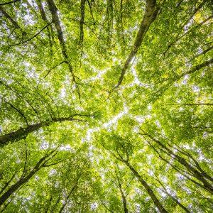 Seamos sustentables